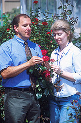 Entomologist and graduate research assistant examine rose plants: Click here for full photo caption.