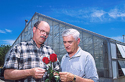 Two plant pathologists examine rose leaves: Click here for full photo caption.