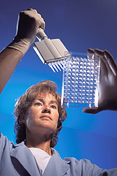 Molecular biology technician prepares bovine DNA samples: Click here for full photo caption.