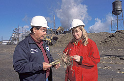 Chemist and production manager inspect billeted cane and associated trash: Click here for full photo caption.