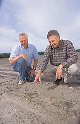 Agronomist and geneticist inspect sugarcane seedlings: Click here for full photo caption.