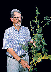 Thomas Devine inspects a Moon Cake soybean plant.