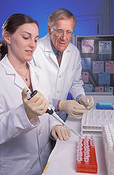Chemist assists technician in tests on isolated fat cells: Click here for full photo caption.