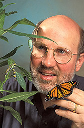 Entomologist conducts research on monarch butterflies: Click here for full photo caption.