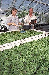Intern and entomologist record giant salvinia biomass: Click here for full photo caption.