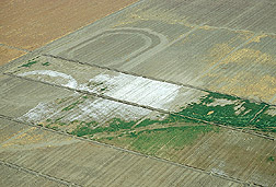 Fields suffering from severe salinization.  Link to photo information