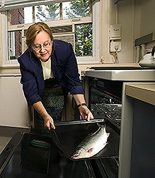 Nutritionist prepares an Alaskan Arctic char before nutrient analysis: Click here for full photo caption.