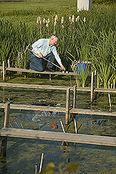 Soil scientist collects bottom sediments from a constructed wetland: Click here for full photo caption.