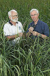 Soil scientist and plant physiologist examine gamagrass in an experimental field: Click here for full photo caption.