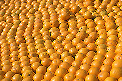 Oranges. Link to photo information