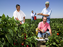 In pepper field, Naem Mazahrih, Nedal Katbeh-Bader and Tom Trout use pressure chamber to check plants' water status while Ron Seligman checks water content of soil with a neutron probe. Link to photo information