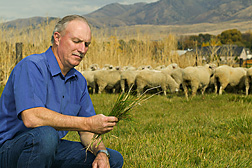 Kip E. Panter examines a forage sample. Link to photo information