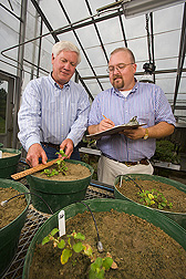 Technician and agronomist evaluate growth of tropical spiderwort in a greenhouse: Click here for full photo caption.