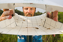 Entomologist inspects a trap for the presence of captured male cactus moths (Cactoblastis cactorum): Click here for full photo caption.