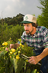 Entomologist surveys an Opuntia cactus plant for damage and eggs from the cactus moth: Click here for full photo caption.