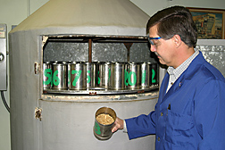 Plant physiologist examines malt partway through the kilning process: Click here for full photo caption.
