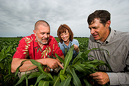 In field, Jeff Pedersen, Deanna Funnell and Toy examine a sorghum plant. Link to photo information