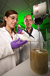 Technician and chemist prepare Paecilomyces fumosoroseus fungal powder and keratin solution for field application: Click here for full photo caption.