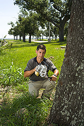 Entomologist drills a tree for monitoring of termite activity and injection of the fungal foam: Click here for full photo caption.