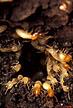 Termites inside tree.