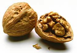 Photo: Walnuts. Link to photo information