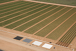 View of cotton field from helicopter showing reflectance tarps used in calibrating multispectral imagery equipment: Click here for photo caption.