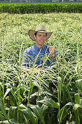 Ecologist examines a sweet corn plant: Click here for full photo caption.