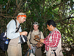 During the 2008 collection trip, ARS researchers (left) and plant pathologist, of the Instituto de Cultivos Tropicales in Peru, examine cacao leaves infected with witches' broom: Click here for full photo caption.