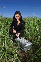 Soil scientist Virginia Jin samples greenhouse gas emissions from switchgrass in a long-term study of soil carbon sequestration: Click here for photo caption.
