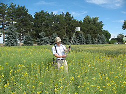 Physical research scientist John Sulik uses a hand-held radiometer to measure spectral reflectance from spring rapeseed in plots near Pendleton, Oregon: Click here for full photo caption.