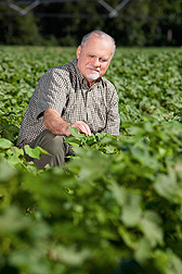 Environmental chemist Thomas Potter examines cotton plants in an herbicide-treated field: Click here for full photo caption.