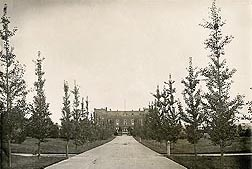 Saunders specified the planting of two lines of ginkgo trees, then a largely unknown landscape choice, to adorn the original USDA building in Washington, D.C., circa 1870: Click here for photo caption.
