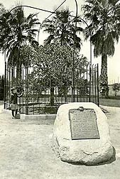 Shown (in the fenced-in area) is one of the original two navel orange trees, circa 1920s: Click here for full photo caption.