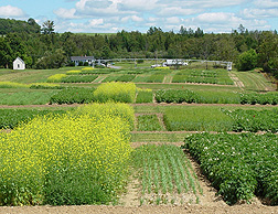 Cropping systems trial in Presque Isle, Maine, representing different soil and crop management goals. Pictured crops include potato, barley, rapeseed, mustard, and sudangrass: Click here for photo caption.