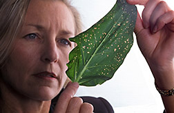 Molecular geneticist Barbara Baker examines a leaf. Click here for full photo caption.