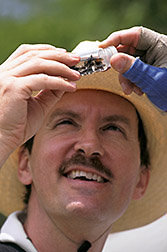 Entomologist Robert Jones examines a weevil species. Click here for full photo caption.