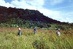 Botanists search for wild peppers.