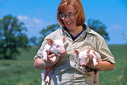 Animal physiologist Cheryl Dyer observes healthy, 10-day-old piglets.