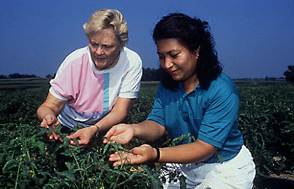 Scientists examining tomato plants.