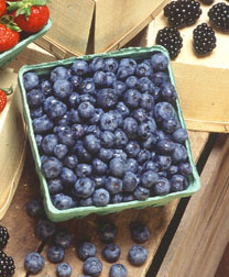 Photo: Container of blueberries. Link to photo information