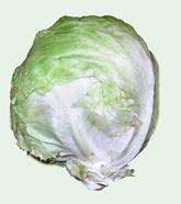 Lechuga 'iceberg'