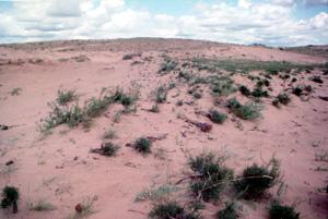 El desierto de Mongolia, donde los científicos colectaron la alfalfa llamada M. ruthenica.
