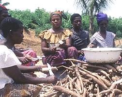Mujeres ganesas pelando la mandioca.