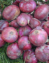 California Early Red onions