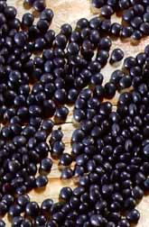 Beluga black lentils