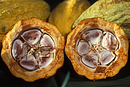 Cross-section view of healthy cacao pod. Link to photo information