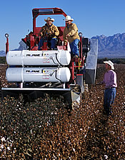 Paul Funk observes and records performance of a propane thermal defoliator prototype piloted through cotton test plots by Fermin Alvarado and James Melendrez: Link to photo information