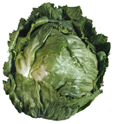 Head of iceberg lettuce.