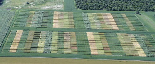 Aerial view showing hundreds of small test plots in a grid pattern.