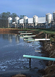 Photo: Swine production facility.